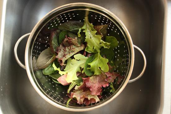 salad-harvest