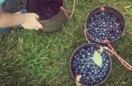 You Pick Blueberries Near Chicago - A Day Trip Itinerary